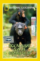 DVD НГО. Последние дикие шимпанзе / National Geographic. Chimps on the Edge