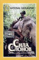 DVD НГО. Сила слонов / National Geographic. Elephant Power