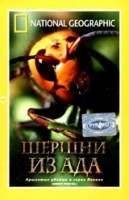 DVD НГО. Шершни из ада / National Geographic. Hornets from Hell
