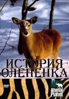 Animal Planet: История олененка