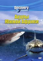 Discovery: Акулы Южной Африки (DVD) / Sharks of South Africa