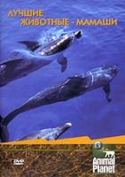 Animal Planet. Лучшие животные-мамаши