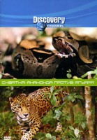 Discovery. Схватка: Анаконда против ягуара (DVD) / Discovery: Animal Face-Off. Anaconda vs. Jaguar