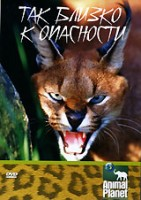 Animal Planet: Так близко к опасности (DVD) / Animal Planet: Up Close and Dangerous