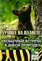 Animal Planet: Необычные встречи в дикой природе (DVD) / North American Wildlife Encounte