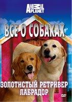Animal Planet. Все о собаках: золотистый ретривер, лабрадор