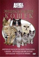 Animal Planet. Энциклопедия кошек: Американская короткошерстная кошка, саванна, шотландская вислоухая, персидская, рэгдолл и сфинкс