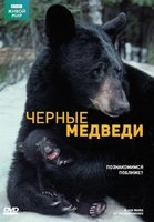 BBC: Черные медведи (DVD) / Black Bears of the Northwoods