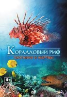 DVD Коралловый риф: Охотники и жертвы / Fascination coral reef 3D: hunters & the hunted