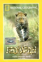 НГО. Леопарды (DVD) / National Geographic: Stalking Leopards
