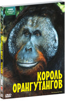DVD BBC: Король орангутангов / The Orangutan King