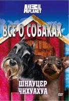 Animal Planet. Все о собаках: шнауцер, чихуахуа
