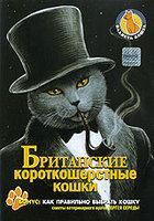 Планета кошек: Британские короткошерстные кошки