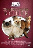 Animal Planet. Энциклопедия кошек: короткошерстный колорпоинт, американский керл, сомалийская, бирманская, японский бобтейл, экзотик