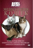 Animal Planet. Энциклопедия кошек: кошка породы мейн кун, египетская мау, сиамская, гималайская, ориентал и турецкая ангора